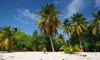 Caribbean,North America,Central America
