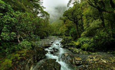 New Zealand,Australia