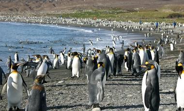 South America,Antarctic Ocean